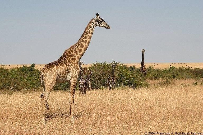 Fuentes de Información - Tenía una jirafa en el patio