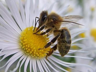 abeja posada en flor